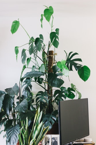 Can houseplants improve air quality?
