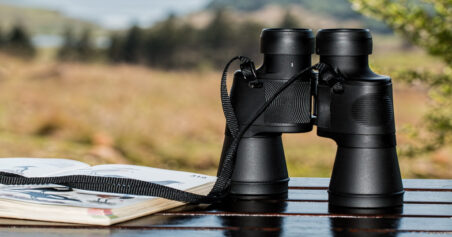 Birdwatching from Home: A Complete Guide