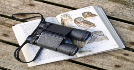 Choosing Binoculars: Which Brand Is Best For Birdwatching?